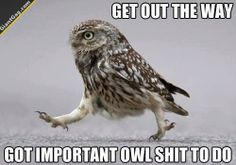 Get Out The Way, Got Important Owl Shit To Do   Click the link to view full image and description : )