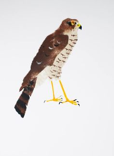 Edwardian Sparrowhawk. Limited edition Pochoir print. Mick Manning 2013