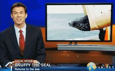 snuffy the seal gif Snuffy The Seal, Funny Seals, Shark Bait, Gifs, Shark Week, Local News, Girl Humor, Best Funny Pictures, Pranks