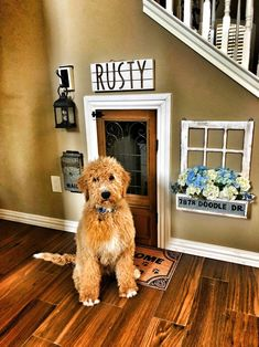Which is more cute, the dog or his little dog house? 😍🐶 TAG a friend who will love this and needs this in their home! Future House, My House, Doggy House, Small Dog House, Dog Bedroom, Puppy Room, Animal Room, Deco Design, House Goals