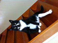 Cutest tuxedo cat!!!
