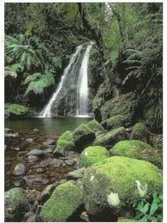 Australia; Gondwana Rainforests. by manxious, via Flickr