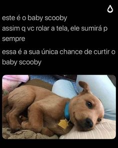 Ai q lindu Animals And Pets, Baby Animals, Funny Animals, Cute Animals, Best Memes, Funny Memes, Otaku Meme, Memes Status, Kawaii