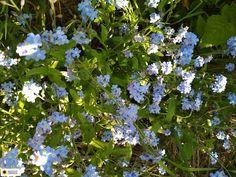Ogrodnicza Obsesja: Maj. Flowers, Plants, Compost, Plant, Royal Icing Flowers, Flower, Florals, Floral, Planets