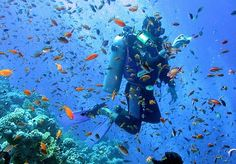 scuba diving ... the top 10 best dive spots around the world