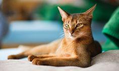 Cât de des ar trebui să-mi duc pisica la veterinar? www.belva.ro/index.php?option=com_k2&view=item&id=466:cat-de-des-ar-trebui-sa-mi-duc-pisica-la-veterinar&Itemid=960