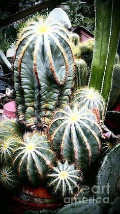 cactus family 3