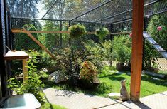 Cat Care Kittens Don't call it a cage. It's a catio. - The Washington Post - To keep cats and birds safe, more people are constructing elaborate and screened outdoor areas for the family feline. Send us a photo. Outdoor Cats, Outdoor Areas, Outdoor Fun, Outdoor Cat Enclosure, Reptile Enclosure, Oregon, Cat Run, Cat Playground, Cat Garden