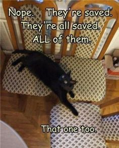 I love animal pics with funny sayings!! / Animals / Trendy Pics