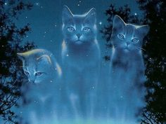 (Warrior Cats   Starclan) These are the kits that fell from a gorge of Windclan. One day one of them would have been leader.
