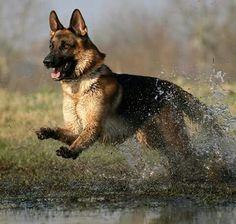 En el agua !