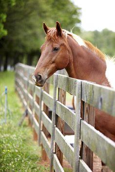 Photos: A Modern Farmhouse | Garden and Gun. Horse fence. this would be so pretty framed on a wall. so torn between nautical and farm decor. love BOTH