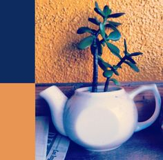 tea potted