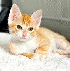 Marmalade Kitten by Josh Norem, via 500px.com