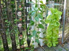 What do you know about vertical gardening? hometalk.com