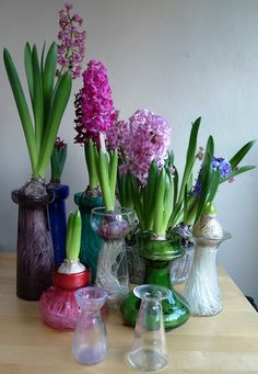 hyacinths in antique vases..I think these colors go well together the different colors of the flowers and the containers they are in make me smile.  I love color!