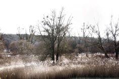 Neu in meiner Galerie bei OhMyPrints: Auwald