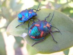 colorful insects | Colourful bugs