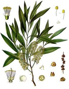 Tea Tree Oil is one of Nature's Best Kept Secrets: 4 Simple Ways to Use