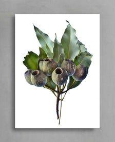 Downloadable Australian Gum Nuts Print Printable Nature Wall | Etsy Printable, Wall, Nature, Plants, Poster, Etsy, Naturaleza, Walls, Plant