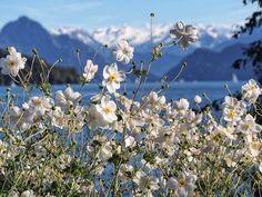 Autumn lake Lucerne