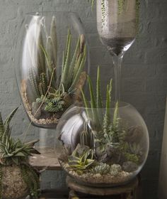 If you still do not have a terrarium in your home, this will be your time to do it. You can find many terrarium ideas as they are really present in most homes and offices. This decoration idea looks really cool and natural. You will find it in many shapes Cacti And Succulents, Planting Succulents, Planting Flowers, Succulent Arrangements, Cactus Plants, Garden Terrarium, Garden Plants, Cactus Terrarium, Glass Terrarium Ideas