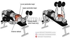 An isolation exercise. Synergists: Upper Pectoralis Major, Anterior Deltoid, and Biceps Brachii (short head only). Best Chest Workout, Chest Workouts, Gym Workouts, Chest Exercises, Dumbbell Fly, Pumping Iron, Weight Training Workouts, Training Exercises, Workout Guide