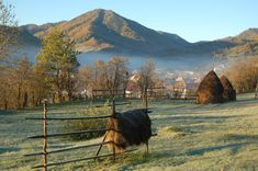 Dawn mist over Botiza, Maramures region, Romania Vampire Games, Explore, Mountains, Country, Travel, Ps, Romania, Countries, Bonn