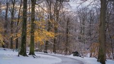 Winter Gold - Gold leaves are one of the many treasures found during the winter months.