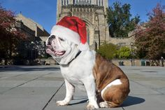 Warm wishes to all for happy, healthy, and handsome holidays from Yale University.