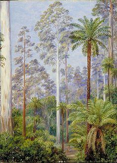 White Gum Tree, Fernshaw, Victoria, Australia,   Marianne North