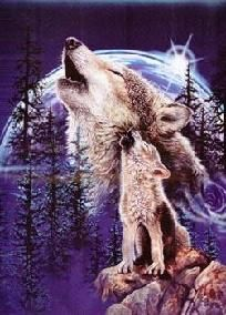 Harmony of Wolves Signature Blanket Queen (Msrv $129.95)