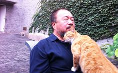 Ai Weiwei's Studio Pets Get Their Moment in the Spotlight - http://blogs.artinfo.com/artintheair/2012/07/19/ai-weiweis-studio-pets-get-their-moment-in-the-spotlight/#