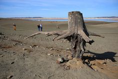 Description of . A tree trunk is photographed along the exposed lake bed at Folsom Lake on Tuesday, Jan. 21, 2014, in Folsom, Calif.  (Aric Crabb/Bay Area News Group)