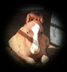Sweet horse in the morning light<3