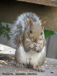 "this is one ""happy"" to see me squirrel"