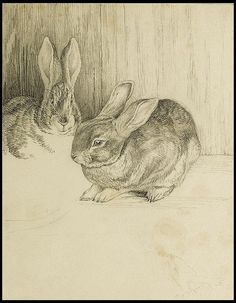 Two Bunnies - Beatrix Potter