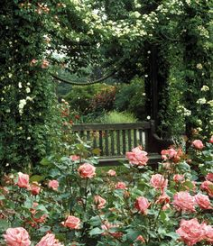 .Bench and roses mmmmmmm yes