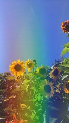 Flowers: rainbow sunflower wallpaper rainbow sunflower inc. Aesthetic Backgrounds, Aesthetic Iphone Wallpaper, Aesthetic Wallpapers, Sunflower Pictures, Sunflower Art, Sunflower Garden, Sunflower Quotes, Rainbow Aesthetic, Flower Aesthetic