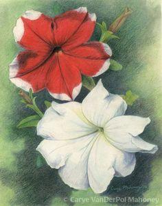 """""""Petunias"""" by CaryeVDPMahoney • #art #flowers #nature"""