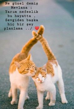 Let There Be Love, Islam Marriage, Tumblr, Meaningful Words, Positive Life, Disney Channel, Kittens Cutest, Cool Words, Letting Go