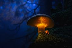 . : moonshroom : . - ...enjoy my deep forest impression - just out of the deepest forests...
