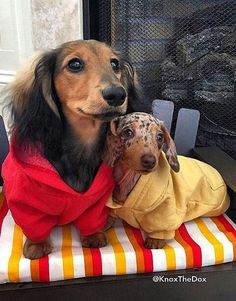 "Friends ❤️ I love the colors ~red and yellow~ ketchup and mustard~ and they are hot dog dogs or ""wiener dogs"" I LOVE IT"