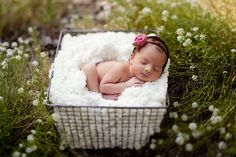 newborn baby in wildflower field in wire basket.  www.thefrenzelsblog.com baby shoot posing idea.