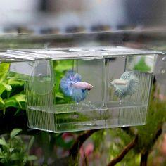 High Quality Aquarium Fish Tank Guppy Double Breeding Breeder Rearing Trap Box Hatchery #clothing,#shoes,#jewelry,#women,#men,#hats,#watches,#belts,#fashion,#style