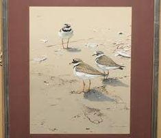 alan m hunt Bird Artists, Bird Paintings, Photorealism, Wildlife Art, Natural World, Birds, Fine Art, Art Prints, Canvas