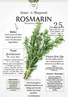 Herbs & Medicinal Plants Infographic Miss Green # Medicinal herbs # Wildkräuter Flora, Gratis Download, Herbs For Health, Herbs Indoors, Growing Herbs, Medicinal Plants, Natural Cures, Permaculture, Yoga For Flexibility
