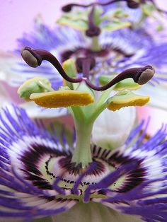 passion flowers-we will be planting some vines on our fence. They are so exotic looking and butterflies love them.