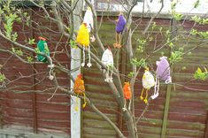 9 Knitted Chickens In A Tree
