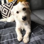 If you follow me on Instagram then you already know that Walter (along with our current foster pup, Arti) is about as spoiled as they come. One little delicacy that I've treated him to since he was a puppy is 1/2 a tsp of coconut oil each night before bed. He never forgets that it's […]